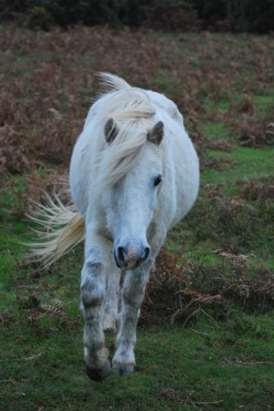 external image white-pony.jpg